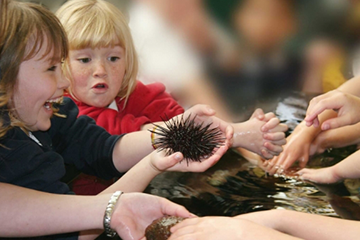 Two children holding a sea urchin above the touch-tank