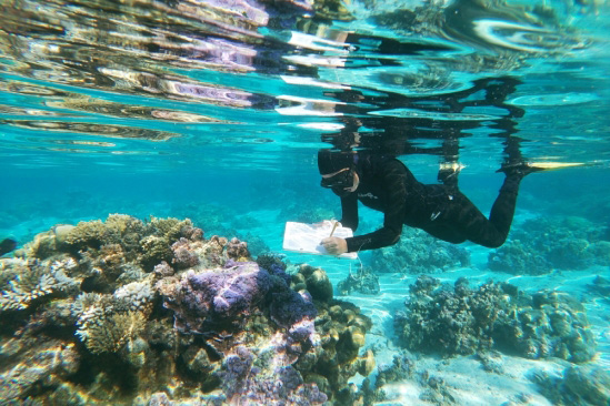 Schmidt Fellow Kelly Speare conducting research in the waters off Moorea, near UC Gump Station.