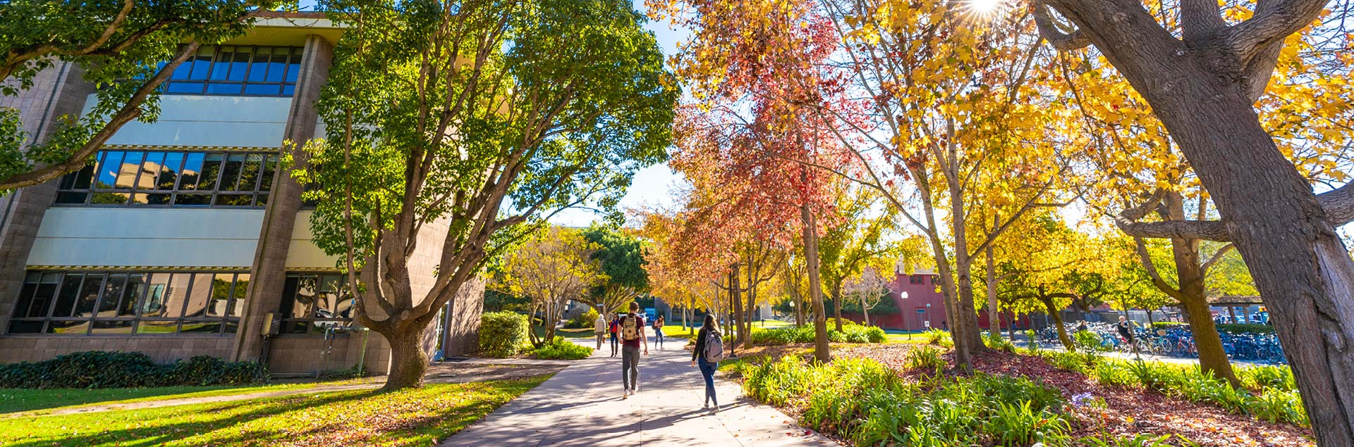 Students walking down a tree-lined walkway on campus